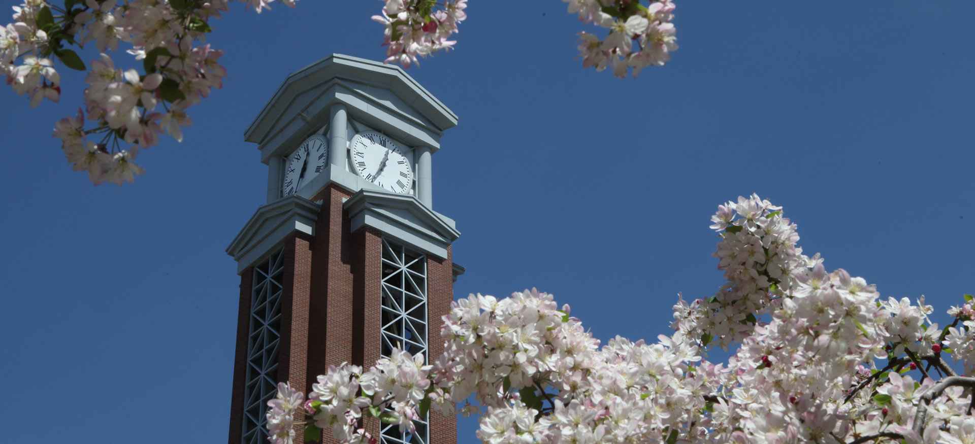 View of the Eastern clocktower with white flowers in the foreground